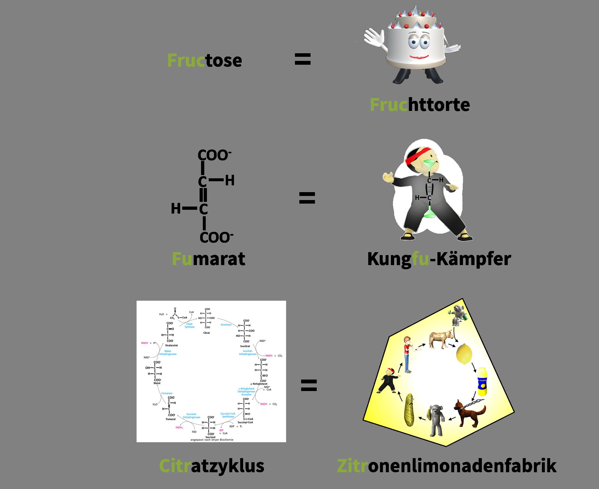 Übersichtsbild Beispiele Merkbilder Eselsbrücken HappyHippocampus